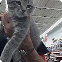 Adopt A Pet :: Alvin - Sterling Hgts, MI