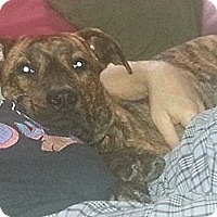 Adopt A Pet :: Carmello - Hamilton, ON
