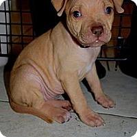 Adopt A Pet :: Soiree - Orlando, FL