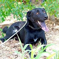 Adopt A Pet :: Chaz - Danbury, CT