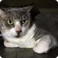 Adopt A Pet :: Lucy - Seminole, FL