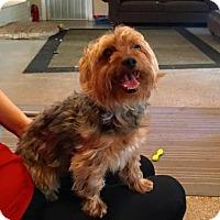 Adopt A Pet :: PETER JENNINGS - Boca Raton, FL