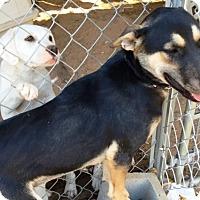 Adopt A Pet :: Willow - Rancho Cucamonga, CA