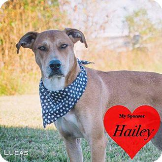 Labrador Retriever Mix Dog for adoption in San Leon, Texas - Lucas