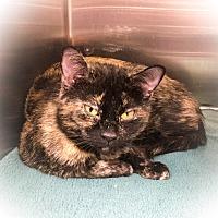 Adopt A Pet :: Pepper - Webster, MA
