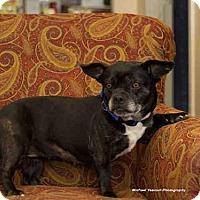 Adopt A Pet :: DIAMOND - Frisco, CO