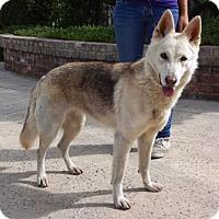 Adopt A Pet :: Cheyenne - Lathrop, CA