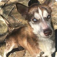 Adopt A Pet :: Joseph - Clay, AL