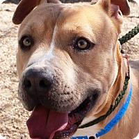 Adopt A Pet :: King - Casa Grande, AZ