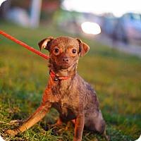 Adopt A Pet :: CARMELO - Irvine, CA
