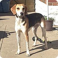 Adopt A Pet :: Skylar - Hamilton, ON