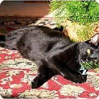 Adopt A Pet :: Ebony and Tiger - Nolensville, TN