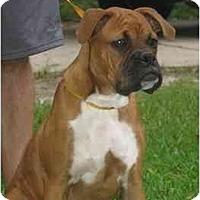 Adopt A Pet :: Tristan - Albany, GA