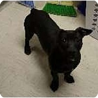 Adopt A Pet :: Shiloh - Alliance, NE