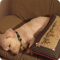 Adopt A Pet :: Rosabelle - Spring City, TN