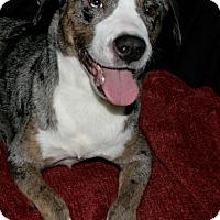 Adopt A Pet :: Hope - Lufkin, TX