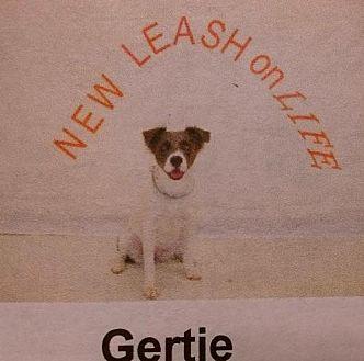 Australian Shepherd Mix Dog for adoption in Albemarle, North Carolina - Gertie