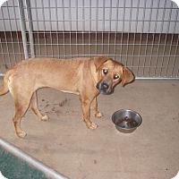 Adopt A Pet :: Meg - Buchanan Dam, TX