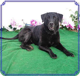 Labrador Retriever Dog for adoption in Marietta, Georgia - MOOCH - adopted @ off-site