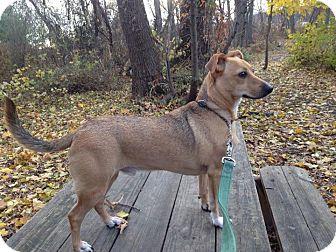 Terrier (Unknown Type, Medium) Mix Dog for adoption in Breinigsville, Pennsylvania - Scout **in a foster home**