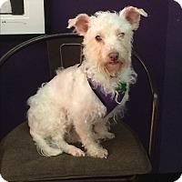 Adopt A Pet :: Faith - Thousand Oaks, CA