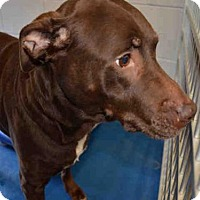 Adopt A Pet :: HERSHEY - Pearland, TX