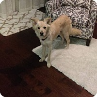 Adopt A Pet :: Rye Leah - New Oxford, PA