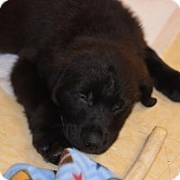 Adopt A Pet :: Hei Hei - Ogden, UT