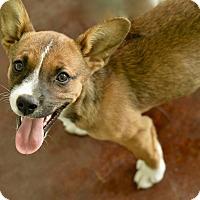 Adopt A Pet :: Tipp - San Antonio, TX
