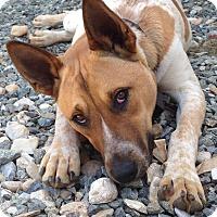 Adopt A Pet :: Bojangles (COURTESY POST) - Baltimore, MD