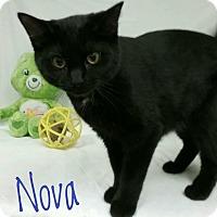 Adopt A Pet :: Nova - Kendallville, IN