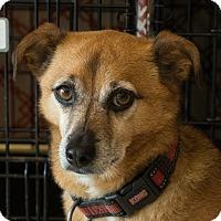 Adopt A Pet :: Toby - Culver City, CA