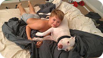 American Staffordshire Terrier Mix Puppy for adoption in Scottsdale, Arizona - Popeye