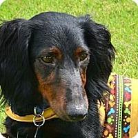 Adopt A Pet :: Alvis - Bryan, TX