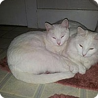 Adopt A Pet :: Ghost and Cloud - Norwich, NY