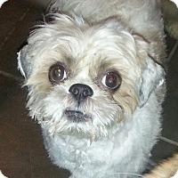 Adopt A Pet :: Max - Freeport, NY