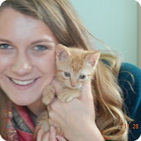 Adopt A Pet :: Nutterbutter - Southington, CT