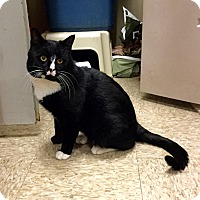 Adopt A Pet :: Pugsley - Colmar, PA