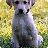Adopt A Pet :: Mattek - Pleasant Plain, OH