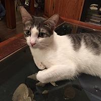 Adopt A Pet :: Klinger - Santa Fe, TX