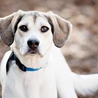 Adopt A Pet :: April - Armonk, NY