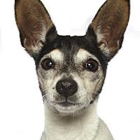 Adopt A Pet :: Zoombi - oakland park, FL