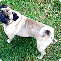 Adopt A Pet :: Mug key - Hazard, KY