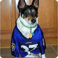 Adopt A Pet :: Coby - Glen Burnie, MD