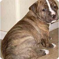 Adopt A Pet :: Turk - Gilbert, AZ
