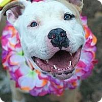 Adopt A Pet :: Carmel - WARREN, OH
