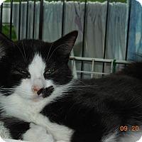 Adopt A Pet :: Picasso - CARVER, MA