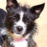 Adopt A Pet :: TWINKLE - North Augusta, SC