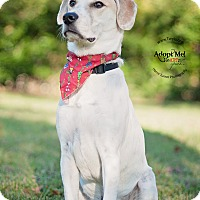 Adopt A Pet :: Beau - Kingwood, TX