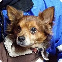 Adopt A Pet :: Dexter - Huntingburg, IN
